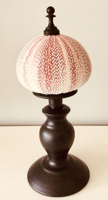 Decorative Common Sea Urchin Shell mounted on classical-styled Standard - Echinus esculentus - 29×10×10 cm