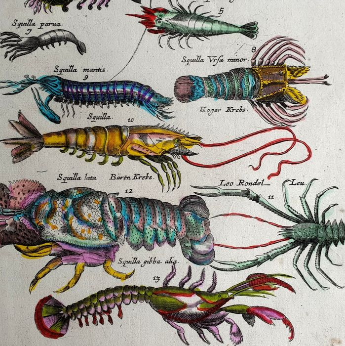 John Jonston & Merian Mattheus (17th century) - Crabs & sea fish - animals fish from Historia Naturalis handcoloured