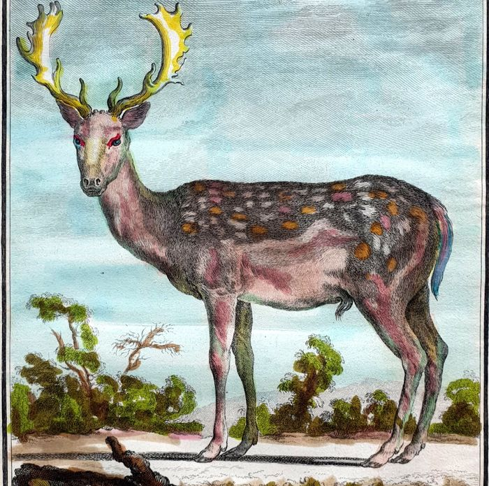5 prints - Georges Buffon (1707-1788) - Various deer and rabbits with their skeletons - handcoloured animals