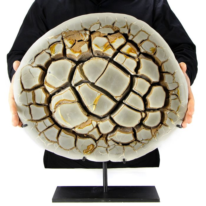 GIANT SEPTARIA sectioned and polished - 500×465×50 mm - 17800 g