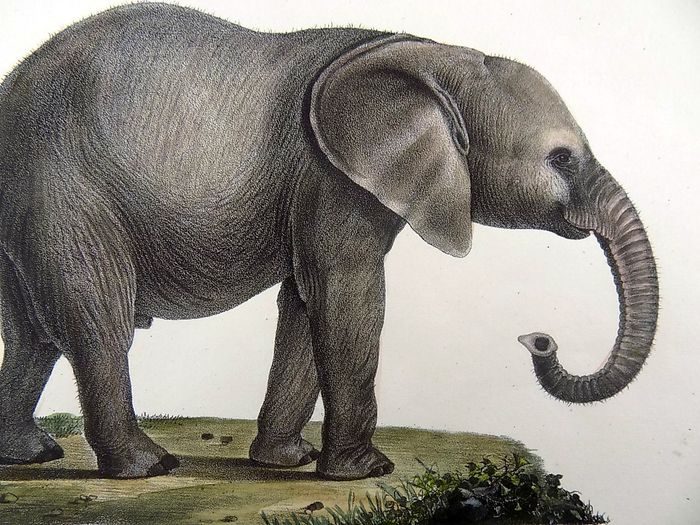 STUNNING AFRICAN ELEPHANT CANVAS PICTURE PRINT 1787
