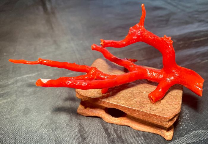 Red coral branch on wooden base - Red Coral - Early 20th century
