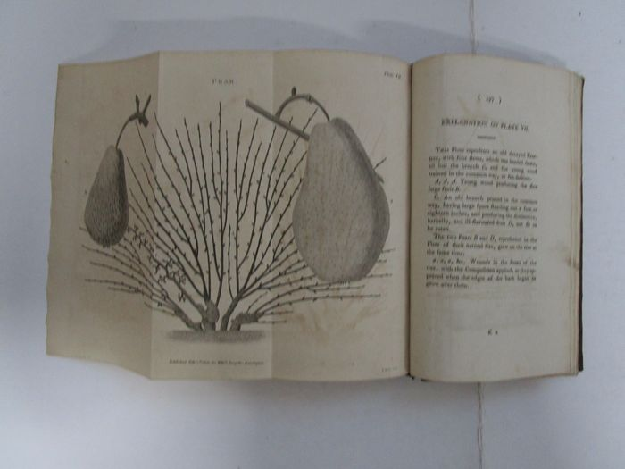 "W.A. Forsyth -  Treatise on the Culture and Management of Fruit-Trees; - in which a New Method of Pruning and Training is fully Described.(..)""Observations on the Diseases.. - 1806"