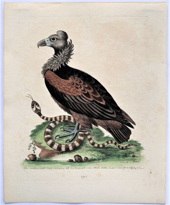 George Edwards - A Natural History of Uncommon Birds/ Gleaning of Natural History - 1743/1764