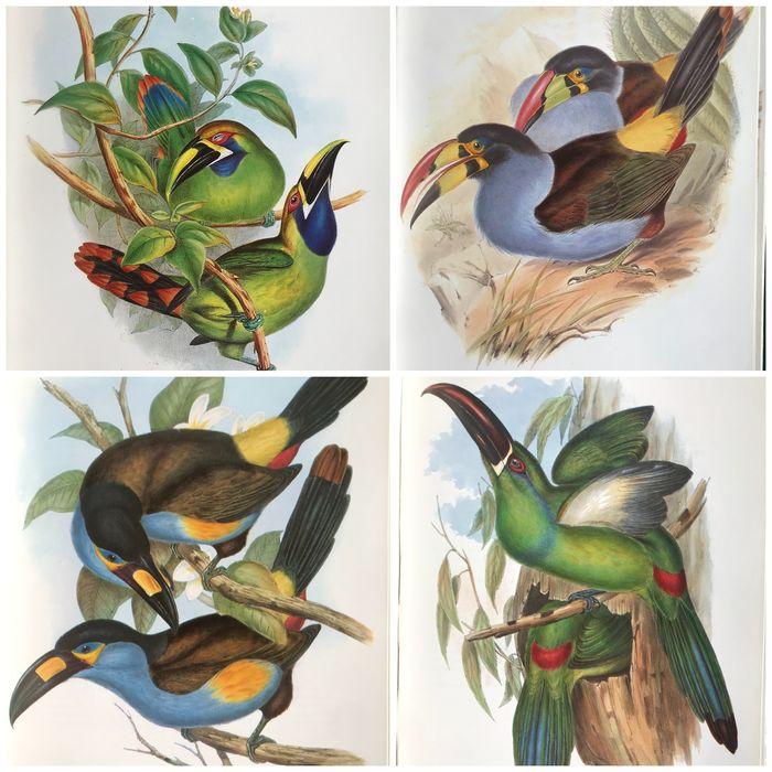 John Gould - Family of Toucans A Monograph of the Ramphastide - 1992
