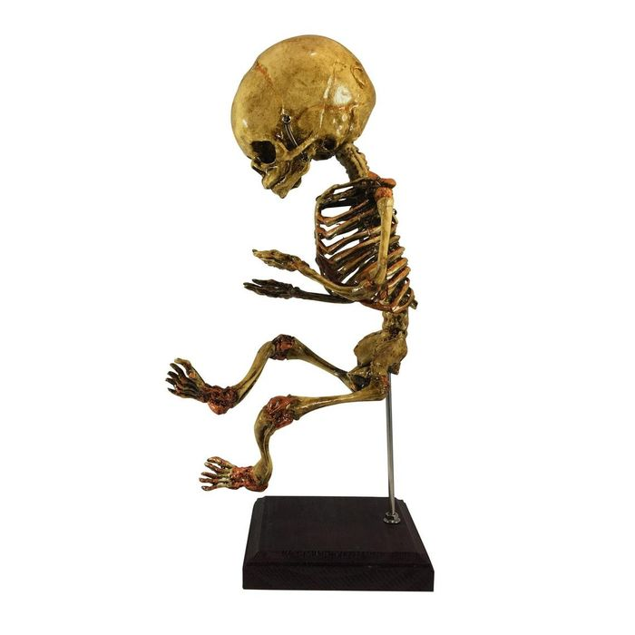 Fetal Skeleton on Pedestal - replica - - - 35×0×0 cm