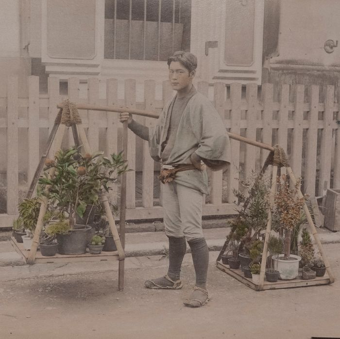 Anonimo - Young plant seller Bonsai and chrisanthemum