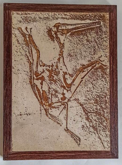 Replica Fossil Pterodactyl on Limestone Matrix - - Ivan Larrea, Spain - Pterodactylus kochi - 30×260×350 mm