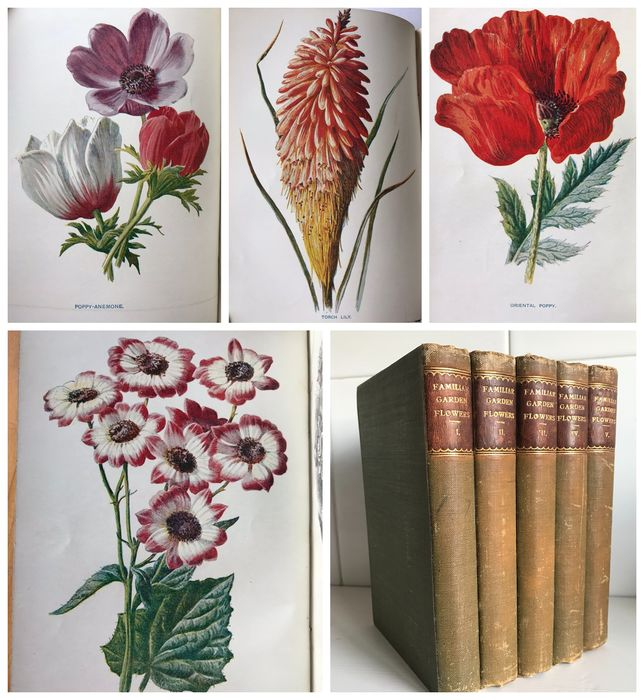 F. Edward Hulme, Shirley Hibberd - Familiar Garden Flowers Volumes 1-5 [with 200 full page colour plates] - 1900