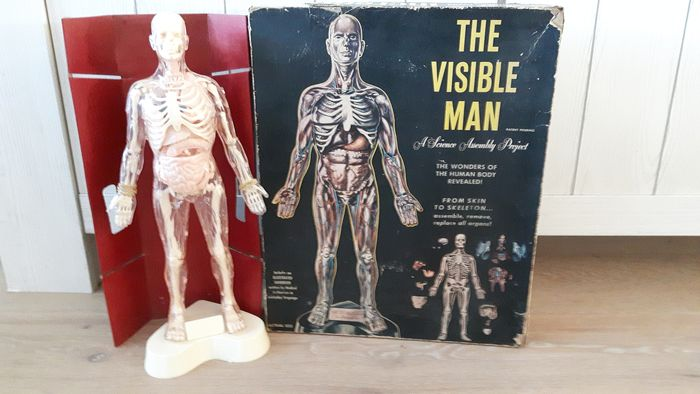Renwal Mineola N.Y. - Vintage anatomisches Modell THE VISIBLE MAN A Science Assembly Project (1) - Kunststoff und Pappe