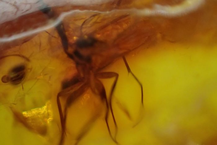 Amber (fossilized resin) Baltic amber with insects and insects - 37×27×9 mm - 25.34 g - (16)
