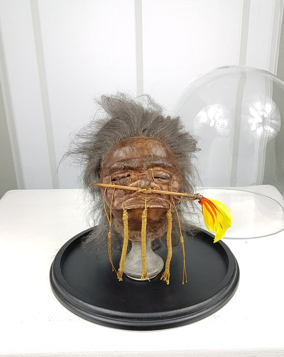 Replica Jivaro Arrow-nose Warrior Shrunken Head on stand under glass dome - Cervidae sp. - 22×23×23 cm
