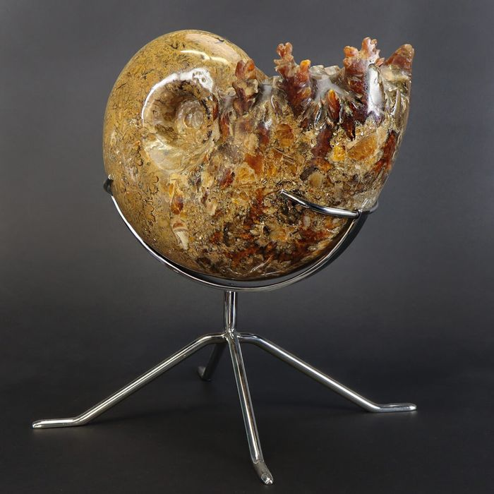 Beautifully polished and presented Ammonite - on Stainless Steel Tripod - Phylloceratidae - 230×170×125 mm