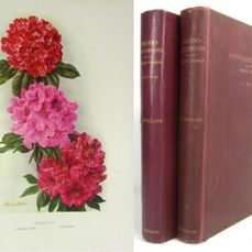 Millais, John Guille - Rhododendrons and the various Hybrids - complete 2 vol set - 1917/1924