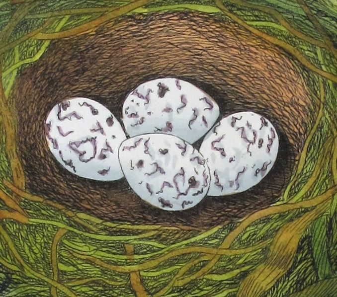 James Bolton (1735 – 1799) set -2- Original Engraving - with Antique Hand Colouring Yellow Hammer, Nest and Eggs - a6q