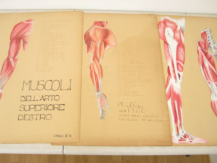 Anatomical tables of artistic Quality channels (3) - Paper