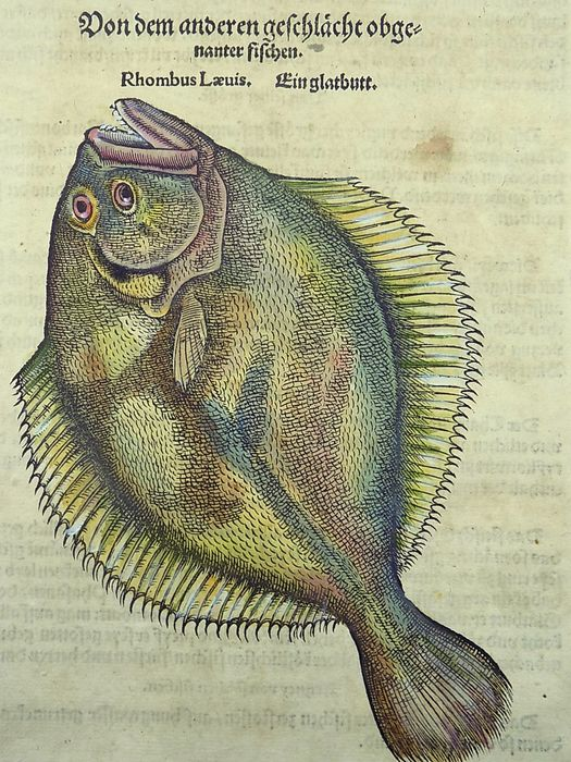 Gesner, Conrad 1516-1565 - Folio with hand coloured woodcut & descriptive text on one leaf - Fish: Flatfish, Rhombus [Ein Glattblutt] - 1557/1557