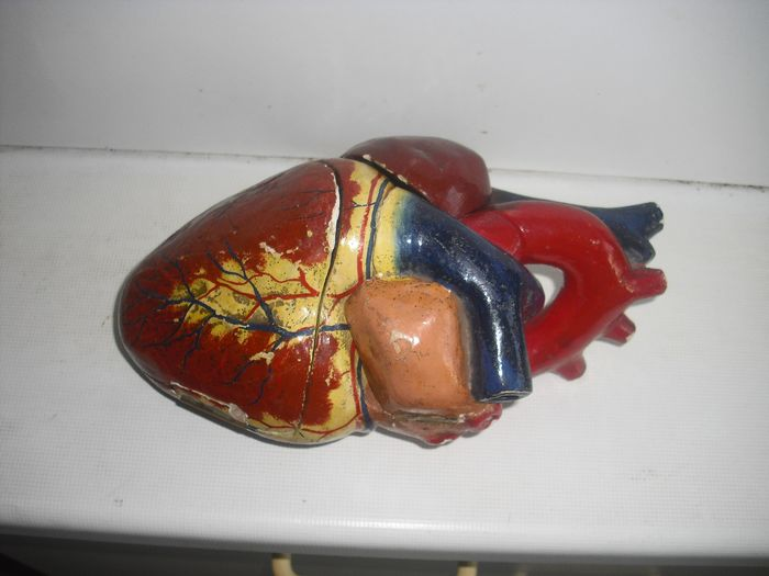 SOMSO ? - anatomical model of the heart made of plaster (1) - Plaster
