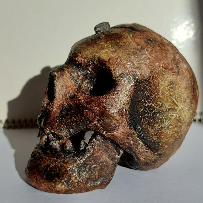 Replica Pygmy Skull with embedded Bullet -detachable jaw -  The Darkest Jungle - - - 9.5×6.5×11 cm