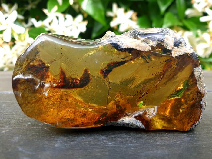 Amber (fossilized resin) Semi-polished - 41,55×24,30×77,60 mm - 56,4 g - (1)