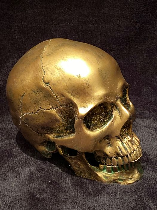 Replica Human Skull in golden resin - - - 16×18×18 cm