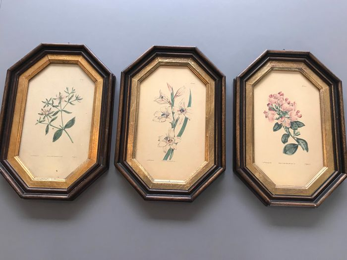 Floral prints in frame (3) - paper, wood, glass