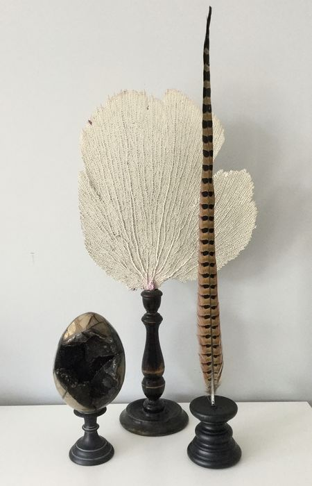Lot of a white seafan septaria egg and pheasant feather on stand Droog geconserveerd