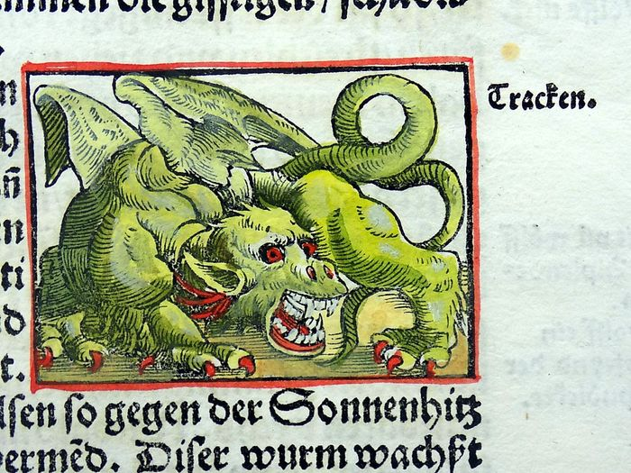 Heinrich Vogtherr (the Elder) (1490 in Dillingen an der Donau – 1556 in Vienna) - Depiction of Dragons (2), Bear, Lynx and Wolf... A indigenous (!) to Swiss Alps