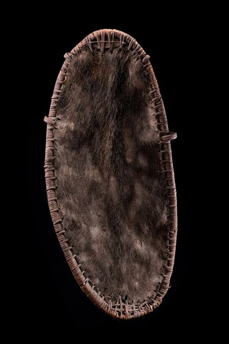 battle shield (1) - Pigskin, rattan - fighting shield - Kwoma - Washkuk, Papua New Guinea