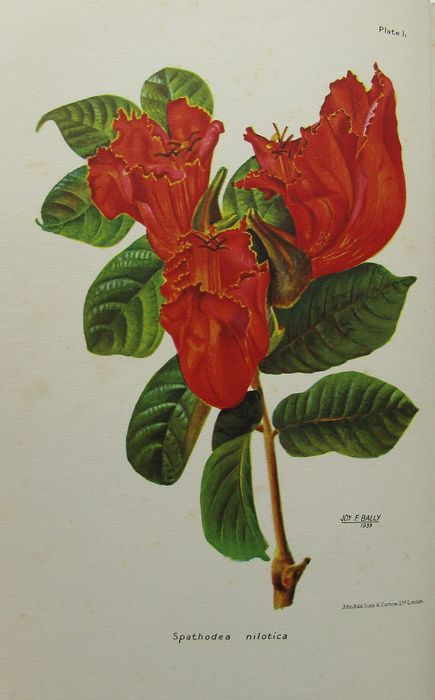 W. H. Harvet, A. J. Jex-Blake - South and East African Flora - 1868/1939