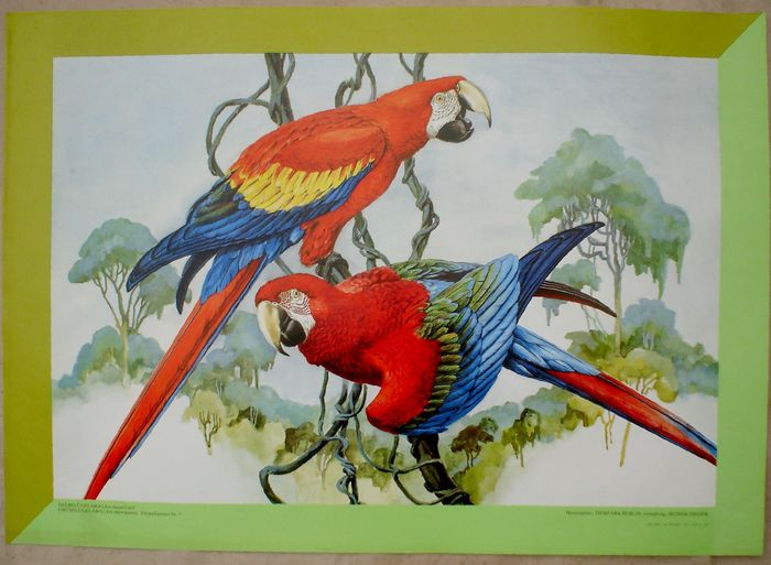 Reiner Zieger - Tierpark Berlin, 2 differend macaws - Δεκαετία του 1980