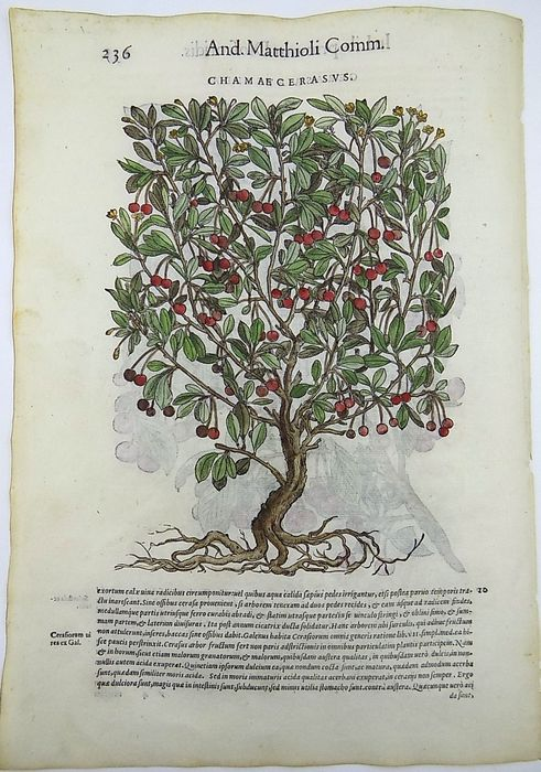 Giorgio Liberale (1527–79); W. Meyerpeck - Cherry Trees: Fruit: Botany - 2 Folio woodcuts on verso and recto of one leaf - 1565