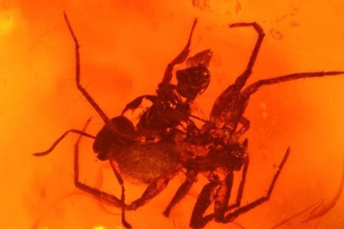 Ant fights with spider in the big plant stone - Formicidae  Araneae