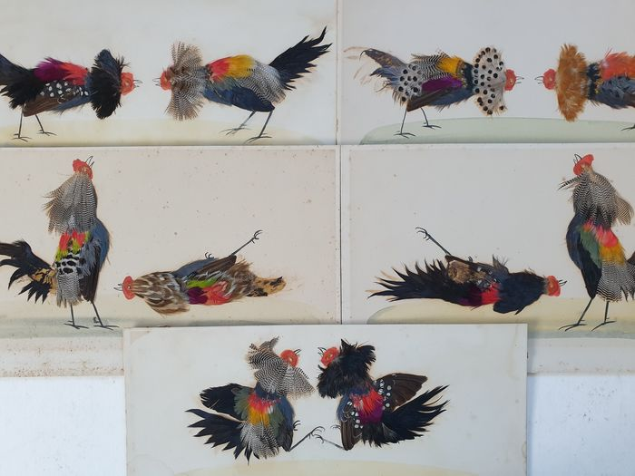 5 cockfighting scenes made with a collage of feathers and watercolour (5) - Card