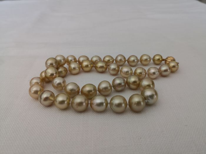 18 kt. Golden south sea pearls, 10-12 mm Natural Color - Necklace