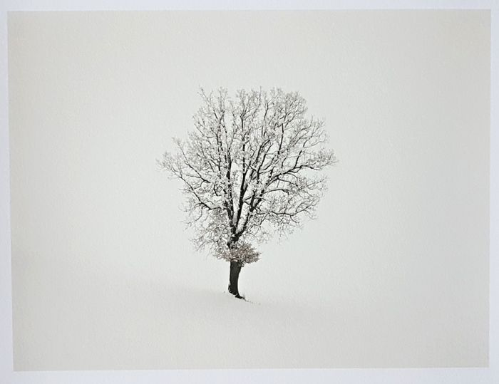 Enzo Crispino (1964) - The tree and the snow