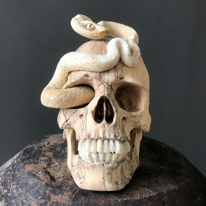 Tamarind Wood Skull with carved Snake - - Tamarindus sp. - 12×10×12 cm