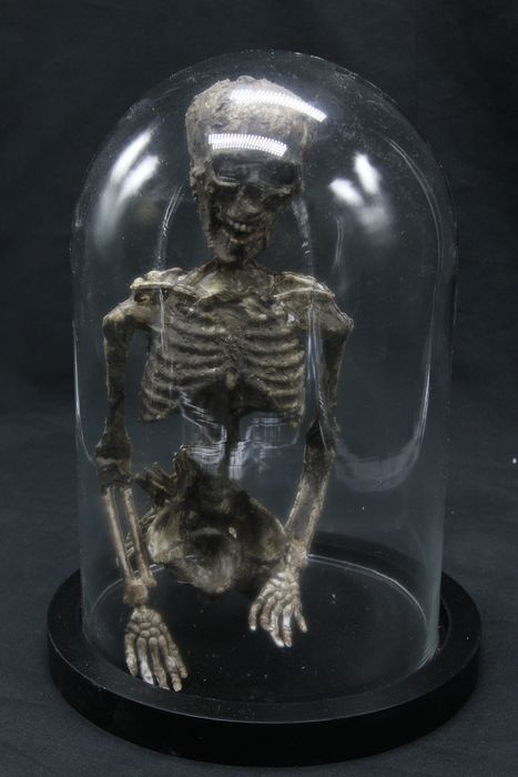Mummified Mermaid under glass dome - - - 30×23×23 cm