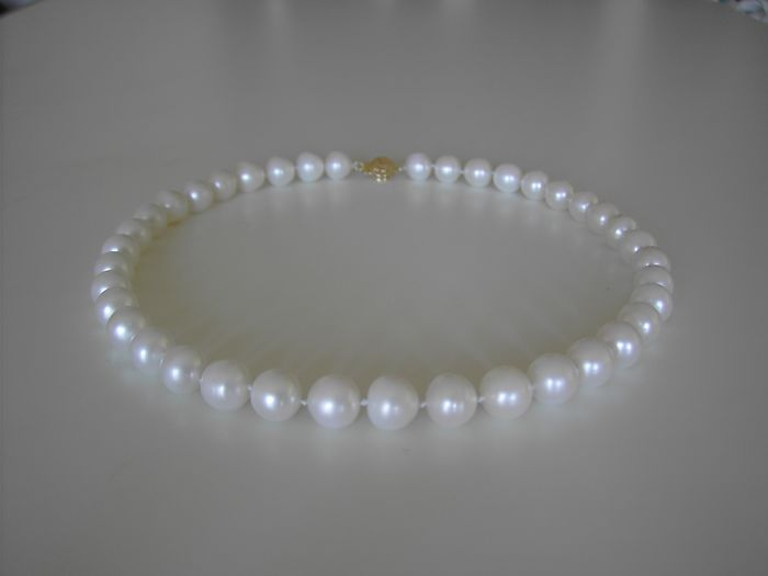 14 kt. South sea pearls, Yellow gold, 11-12 mm - Necklace