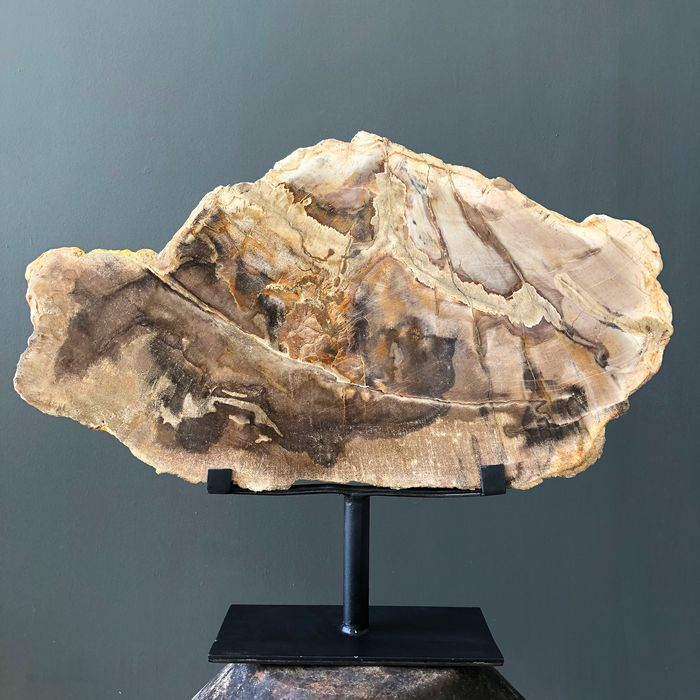 Large Petrified Wood Slice on Stand - Steel, Wood