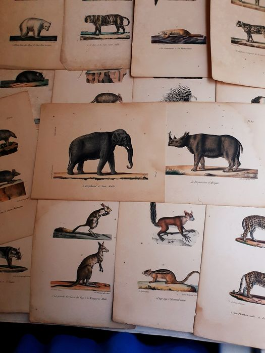 13 prints by various artists - Small and large mammals