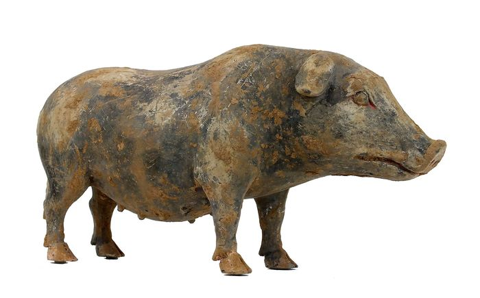 Mingqi - Terracotta - A Grey Earthenware Model of a Standing Sow, L- 42 cm. TL test. - China - Han Dynastie (206 v. Chr.- 220 n. Chr.)