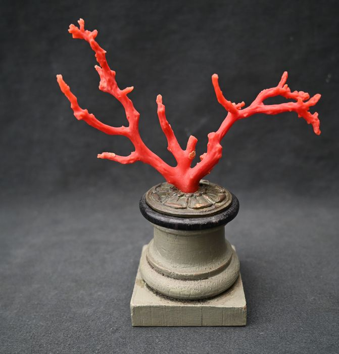 Mediterranean red coral stand, curiosity cabinet, art chamber - Bronze (patinated), Wood, red coral - 19th century
