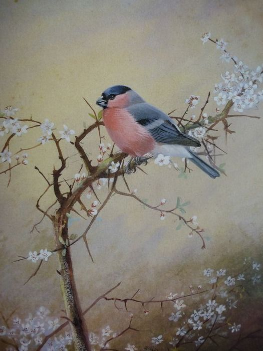 Philip Rickman - A selection of bird paintings and sketches - Limited edition - 1979