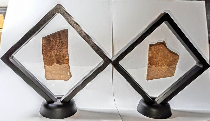 Fossil Florida Turtle Scutes in floating frames - - - Apalone ferox - 40×190×190 mm