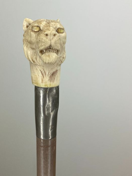 Slender walking stick with an ivory tiger head - Certificate included - Ivory - Circa 1890