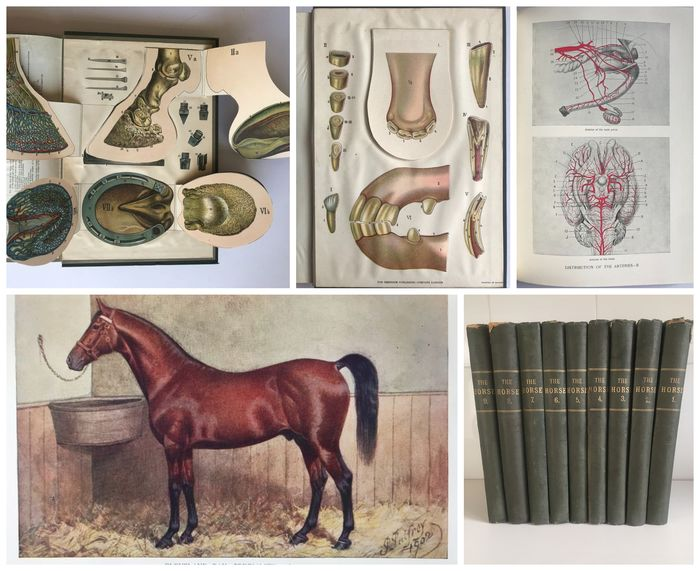 Professor J. Wortley Axe - The Horse Its Treatment in Health and Disease Volumes 1-9 - 1908