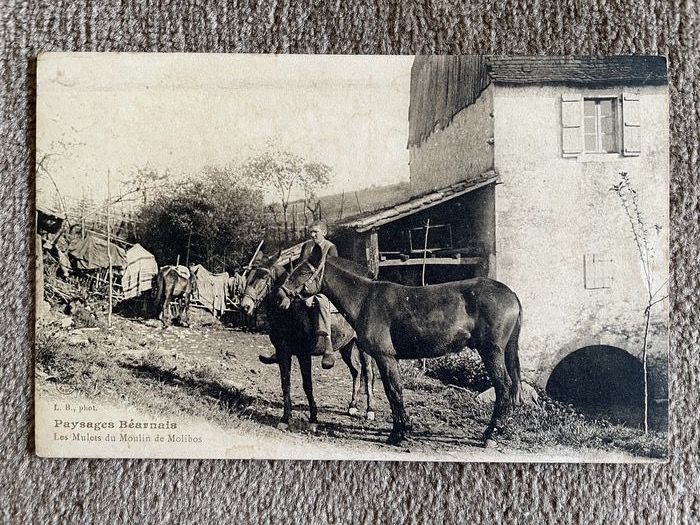 France - Ethnology (Ethnic / Ethnographic Postcards) - Postcards (Collection of 23) - 1905