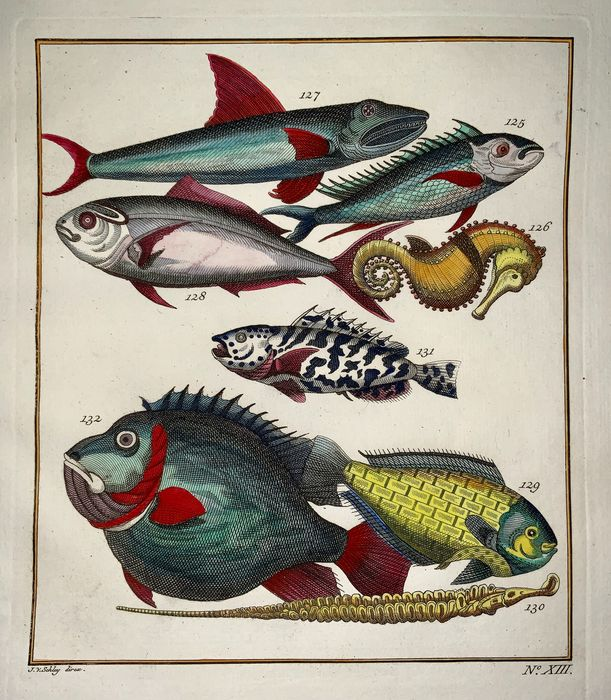"""Lot of 2 hand coloured copper engravings by Jacob Van der Schley (Amsterdam, 1715 – 1779) - """"Poissons; extraordinaires d'Amboine"""" Exotic Fish: Reef Fish, Seahorse, Wrasse, Goatfish, Flyingfish"""
