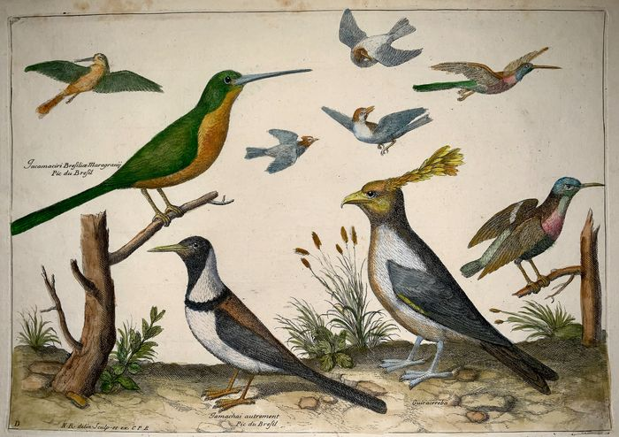 Nicholas Robert (1614-1685) - Folio - Ornithology: Exotic Birds set in Landscape - Jacamar, Hummingbirds - Hand coloured
